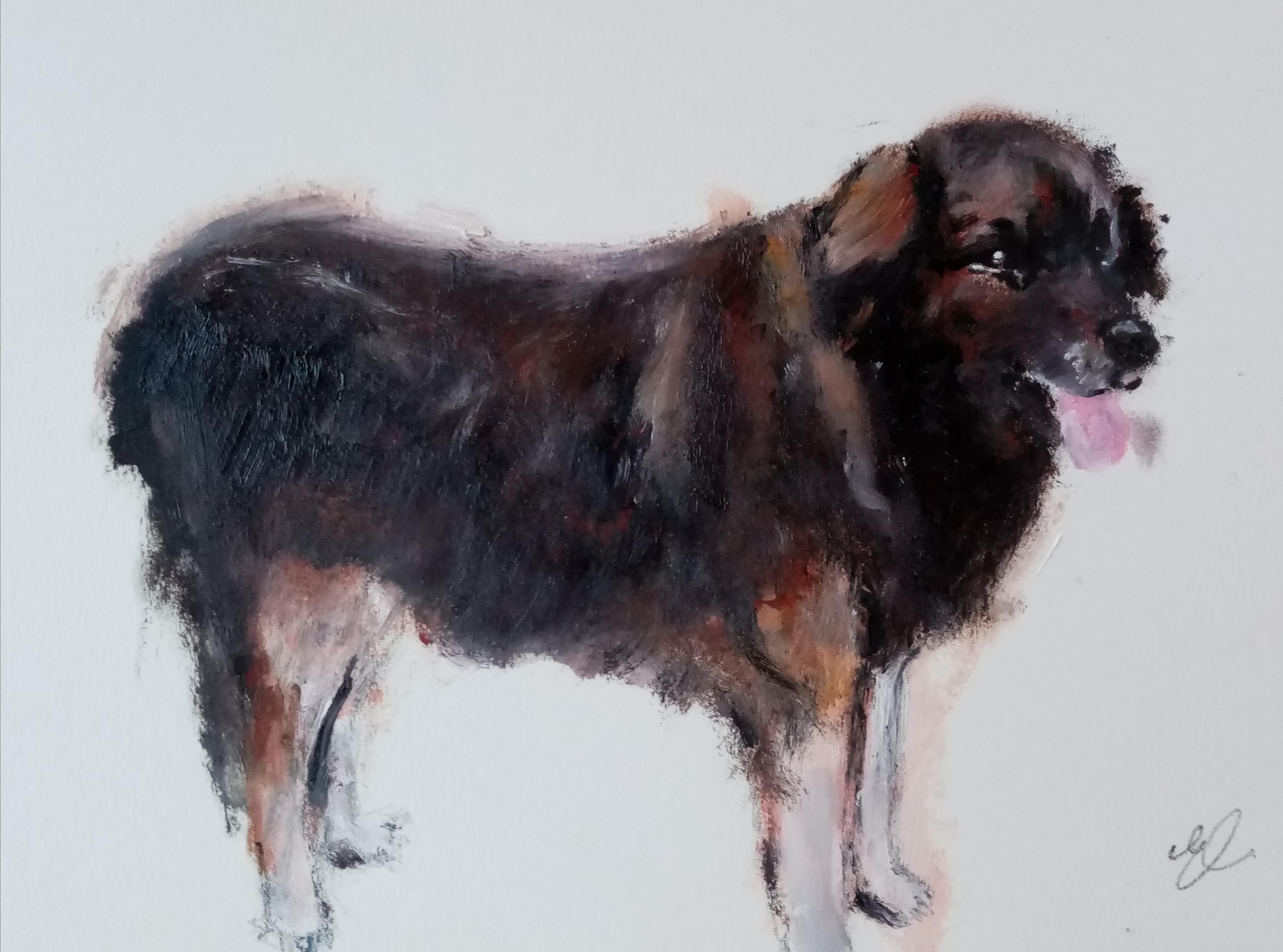 portrait gros chien Jarod
