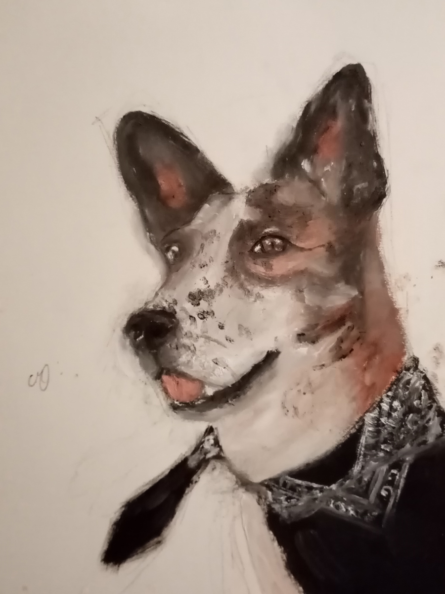 Rodéo, chien star des réseaux sociaux